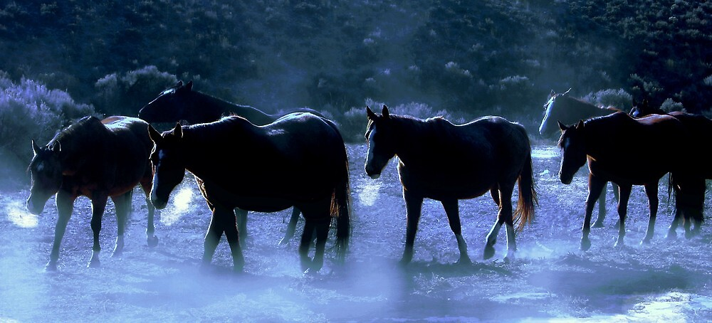 Cold Creek Crossing Nevada  by Jeanne  Nations