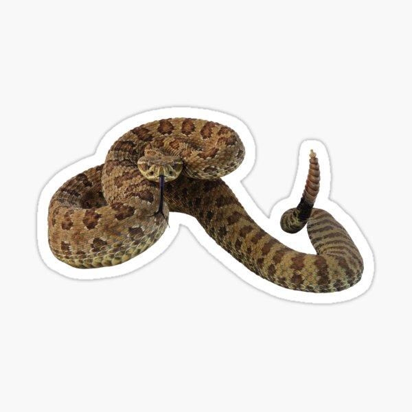 Rattler Sticker