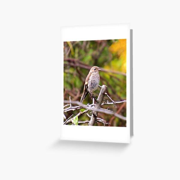 ROBIN ~ Flame Robin by David Irwin Greeting Card