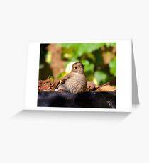 ROBIN ~ Flame Robin by David Irwin ~ WO Greeting Card