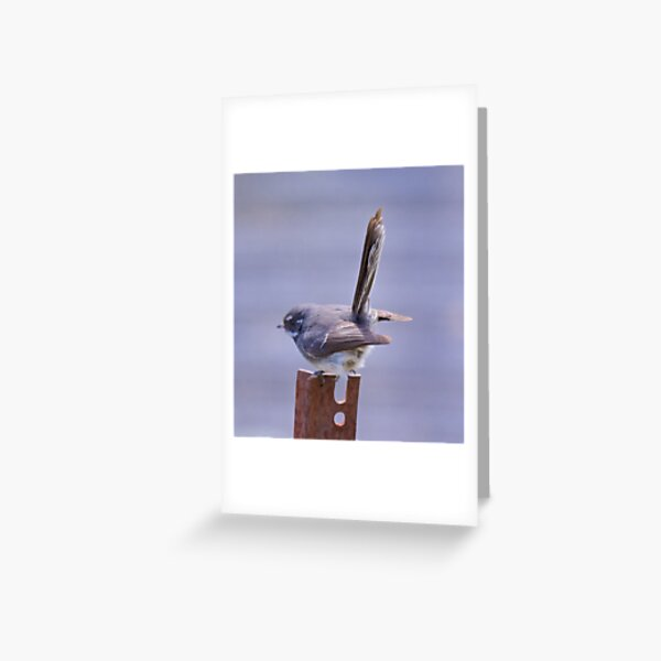 FANTAIL ~ Grey Fantail E4USWyGh by David Irwin Greeting Card