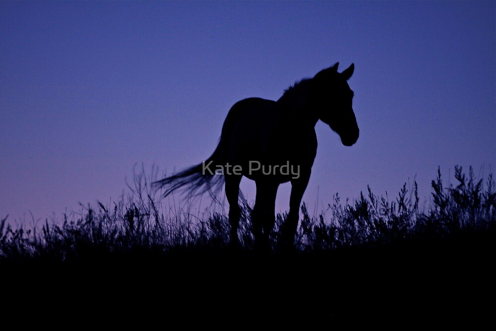 Nights of Freedom by Kate Purdy