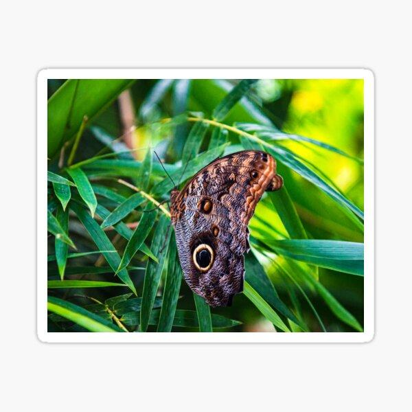 Costa Rica Butterfly Sticker