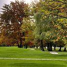 Autumn Path by Monica M. Scanlan