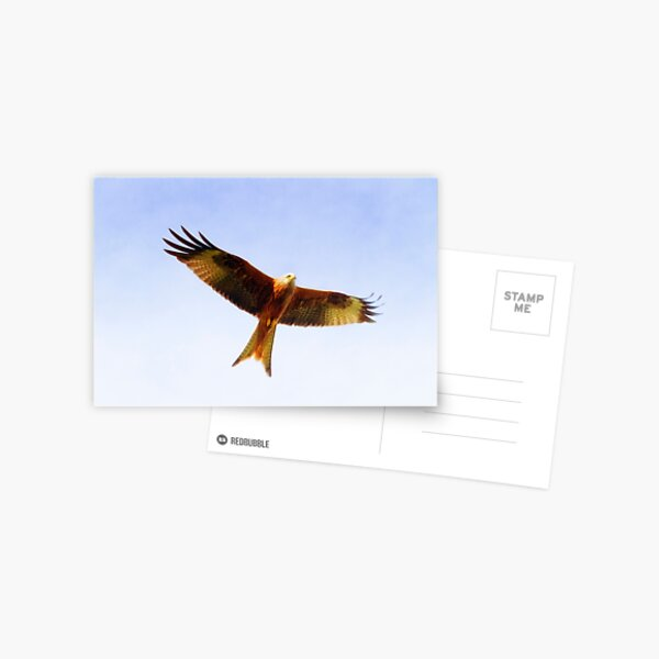 Red Kite in flight Postcard
