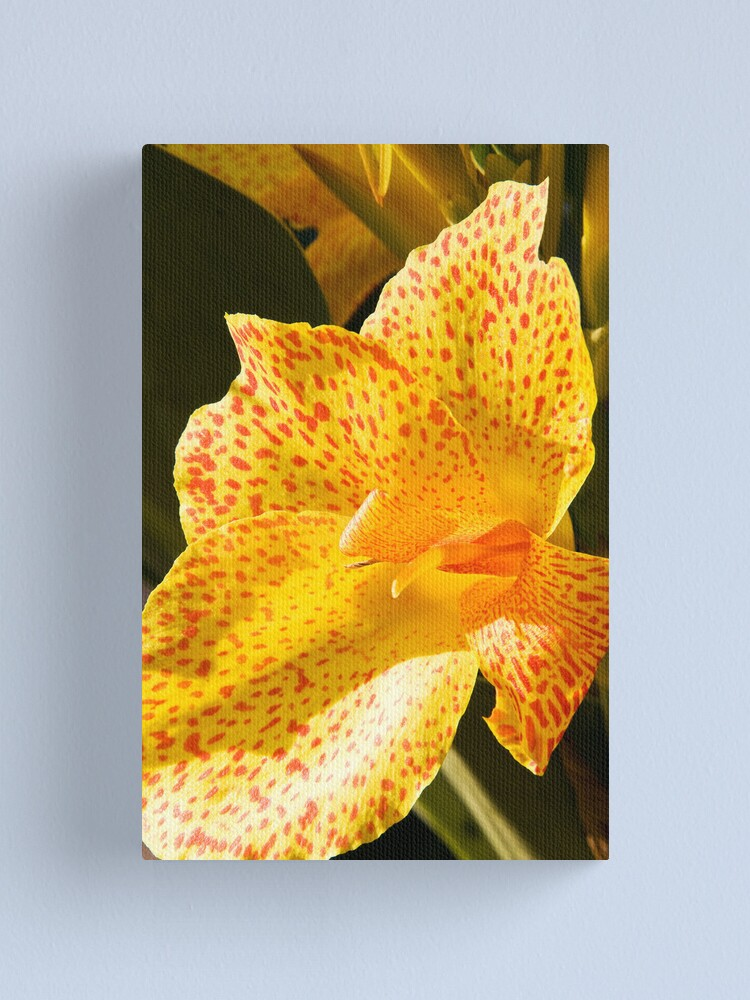 Alternate view of Canna Lily  Canvas Print