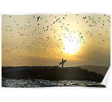 Surfer watches Bird flock Poster