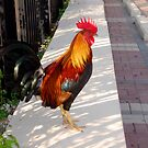 What's about all the Roosters in Key West, Florida by Susanne Van Hulst
