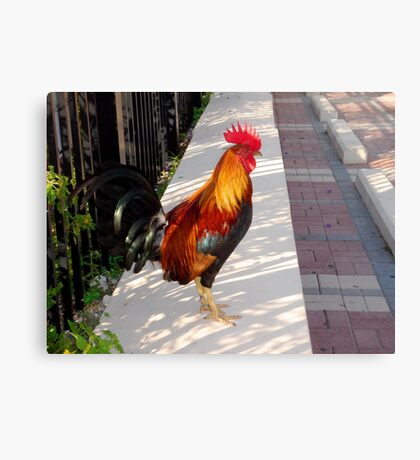 What's about all the Roosters in Key West, Florida Canvas Print