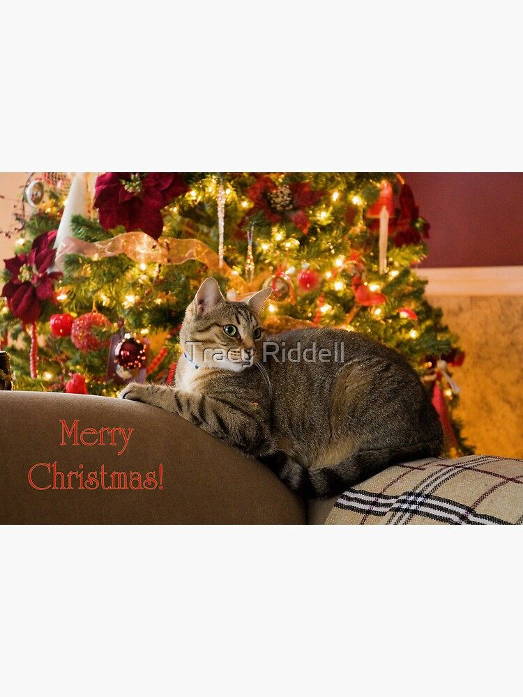 Christmas Kitty  by taos