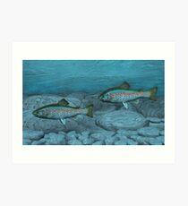 Rainbow Trout Art Print