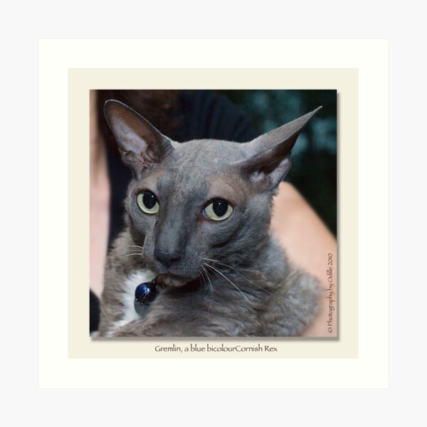 cat calendar image #4 Gremlin, by name and nature  Art Print