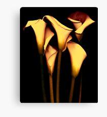 Yellow Calla  Lily Canvas Print