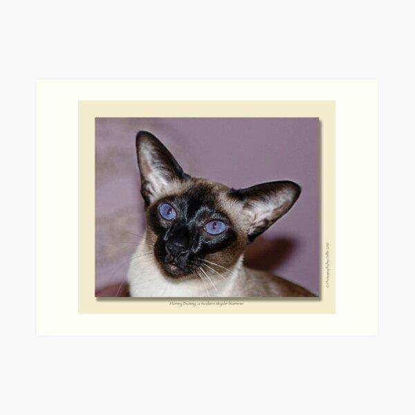 cat calendar image #7 Honey Bunny  Art Print