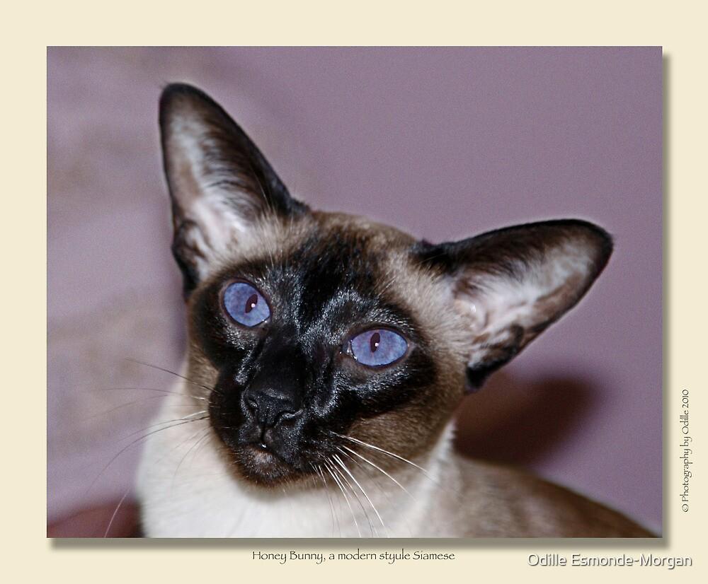 cat calendar image #7 Honey Bunny  by Odille Esmonde-Morgan