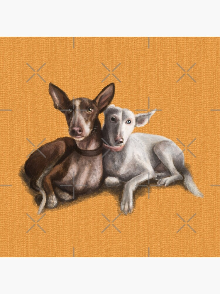 The Podenco by elspethrose