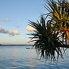 Bribie Island in the Sun (4) by Barbara Burkhardt