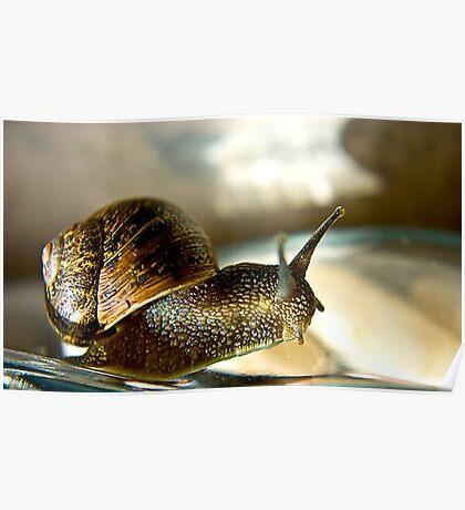 Snail #2 Poster