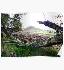 Hawnby Moor Poster