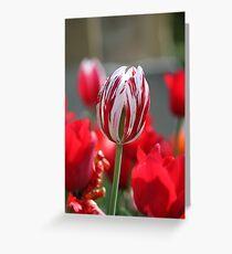 Multi-Coloured Tulip Greeting Card