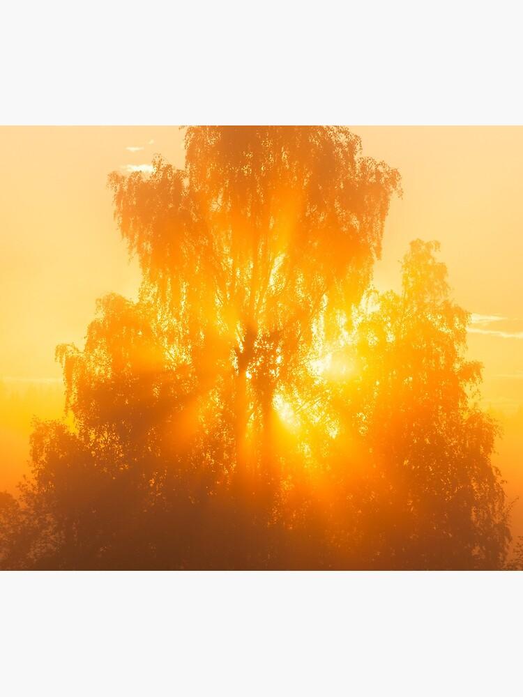 Sunbeams through tree in morning fog by Juhku
