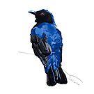 Asian Fairy Bluebird by christinahewson