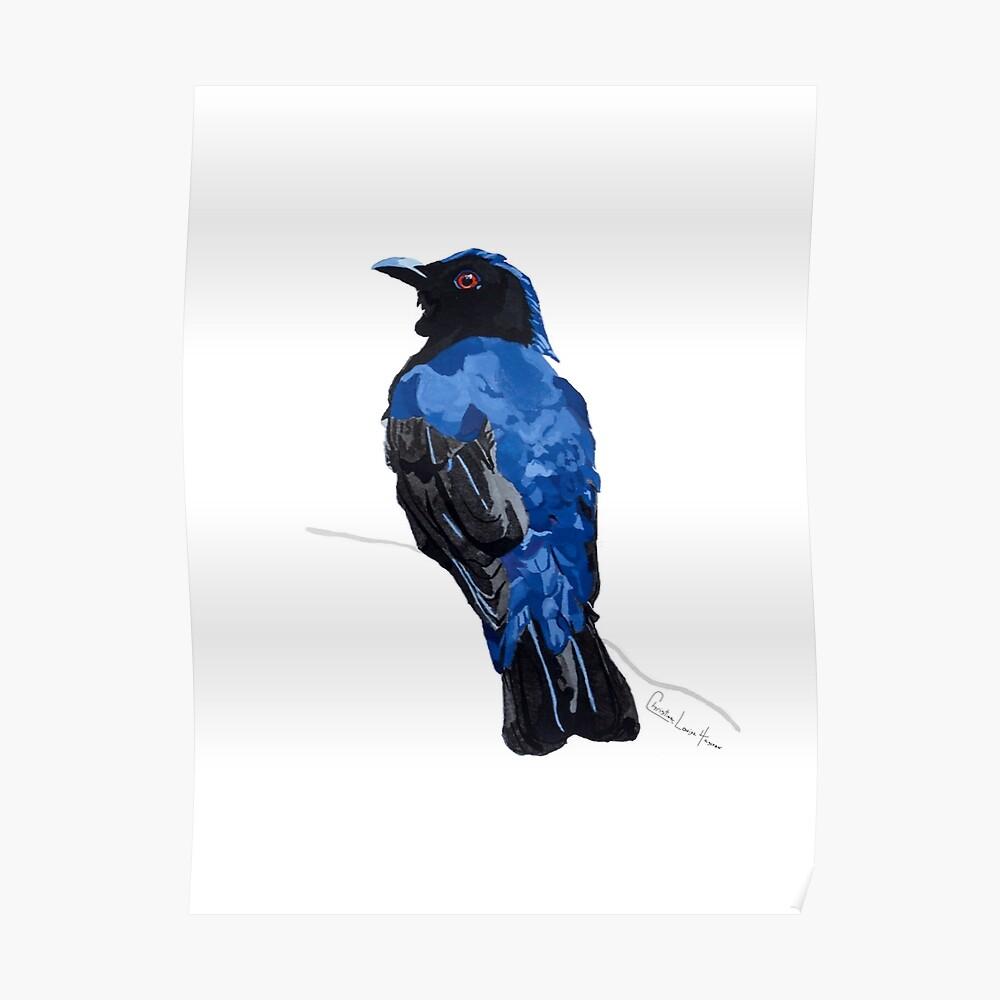 Asian Fairy Bluebird Poster
