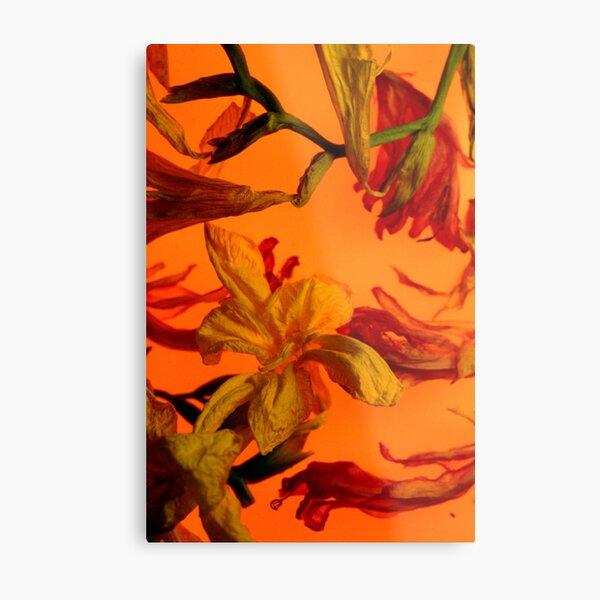 Fresia Orange Metal Print
