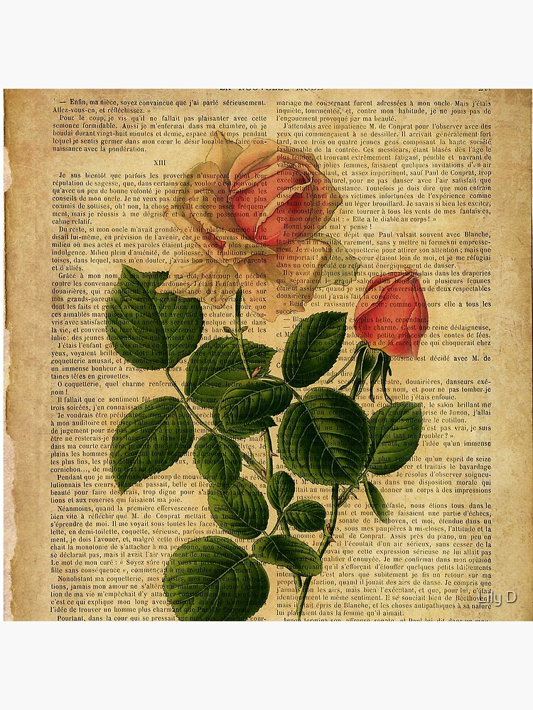 Botanical print, on old book page - flowers - roses by lldd11