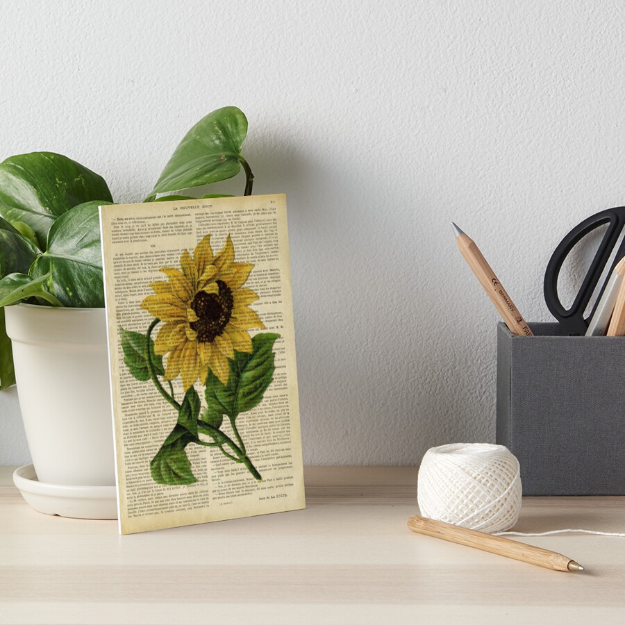 Botanical print, on old book page - flowers- Sunflower  Art Board Print