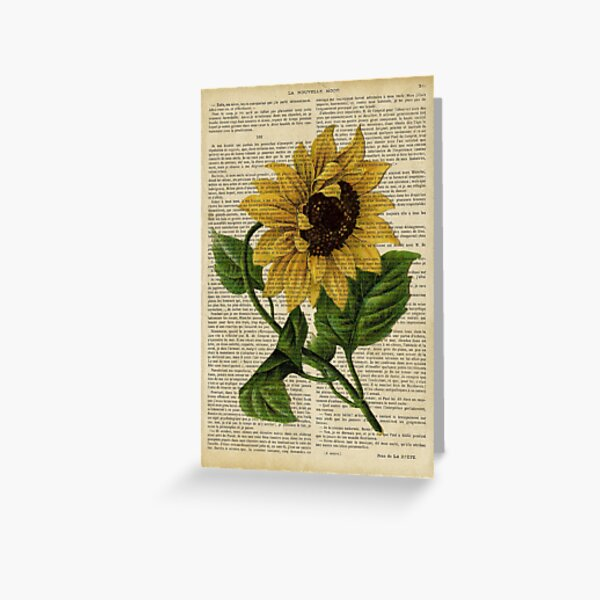 Botanical print, on old book page - flowers- Sunflower  Greeting Card