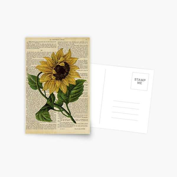 Botanical print, on old book page - flowers- Sunflower  Postcard