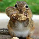 Chipmunk Adventures by Lori Deiter