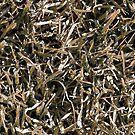 Dry Lawn Grass by bryanbellars