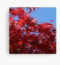 Japanesse Maple Leaves  Canvas Print