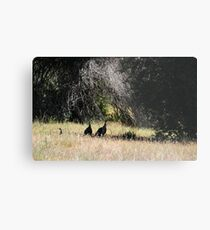 TURKEYS IN THE SHADE Metal Print