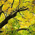 Fall Leaves in California by Douglas E.  Welch