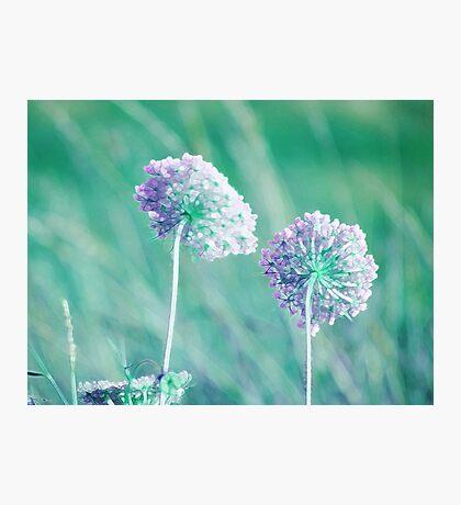 Summer Grass 31 Photographic Print