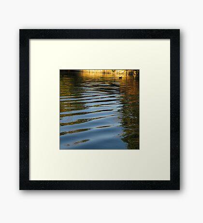 Water Hen Framed Print