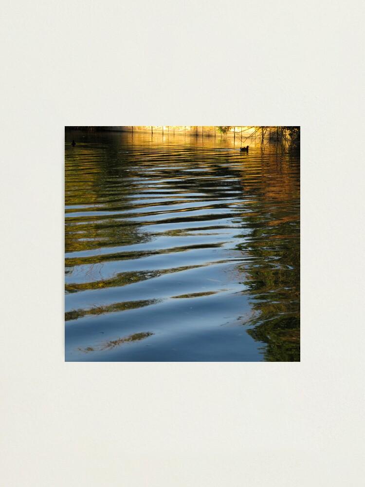 Alternate view of Water Hen Photographic Print