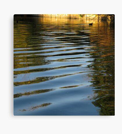 Water Hen Canvas Print