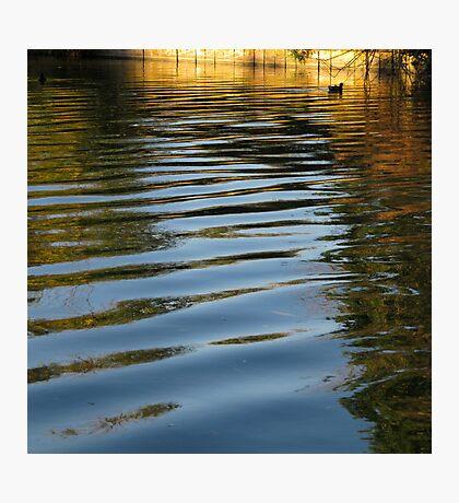 Water Hen Photographic Print