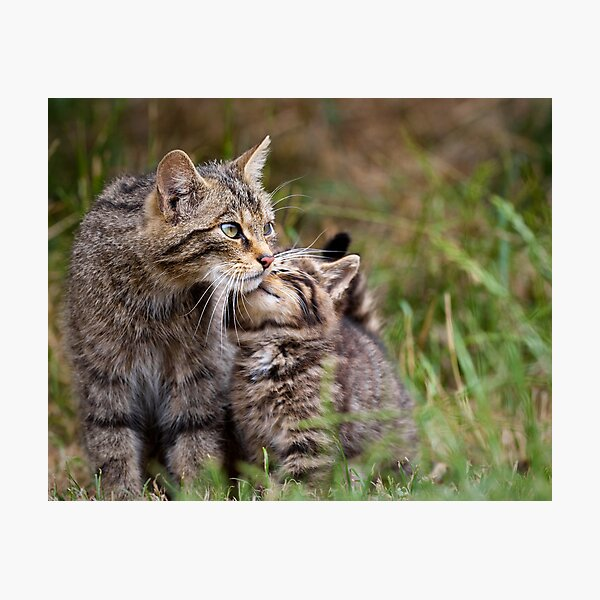 Big Cat, Little cat Photographic Print