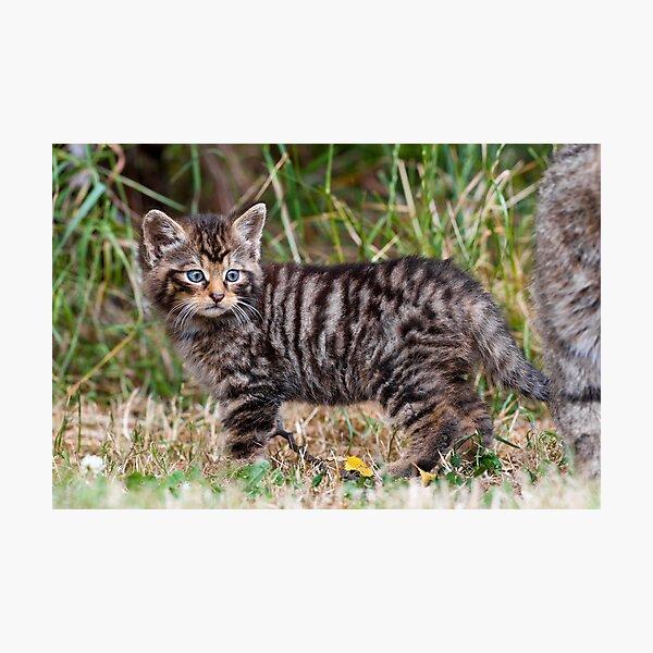 Little Tiger Photographic Print