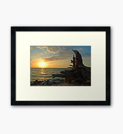 Driftwood Sunset in Key West, FL Framed Print