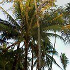 Dancing Palm - Boracay by Wayne Holman