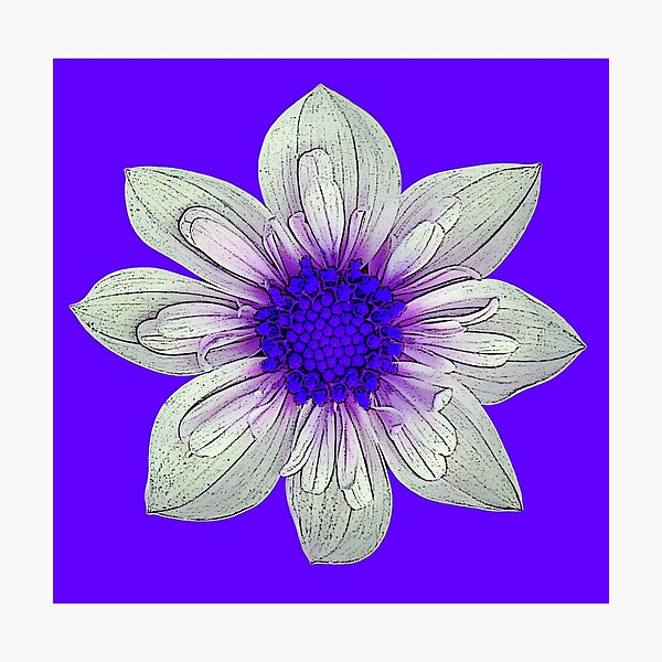 Flower Power - Purple Photographic Print
