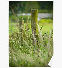 Weeds and wild hay Poster