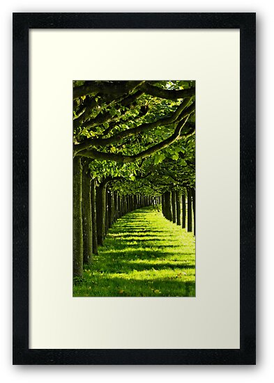 Green Allee by TCL-Cologne