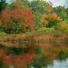Finally Foliage by Debbie Robbins